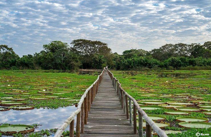 Parque Natural El Pantanal Santa Cruz Bolivia